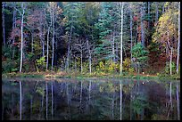 Trees in fall colors reflected in a pond, Blue Ridge Parkway. Virginia, USA