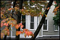Leaves and house detail. Columbia, South Carolina, USA (color)