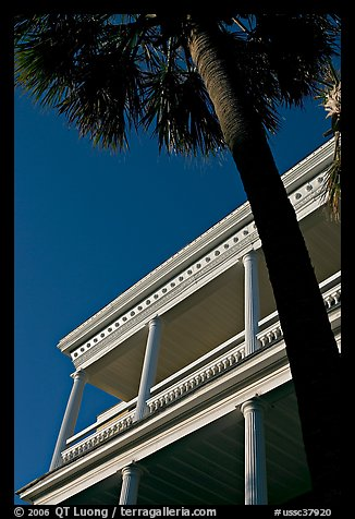 Palm tree and facade with columns, looking upwards. Charleston, South Carolina, USA (color)