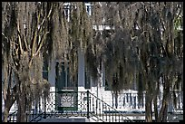 Spanish moss and house. Beaufort, South Carolina, USA (color)