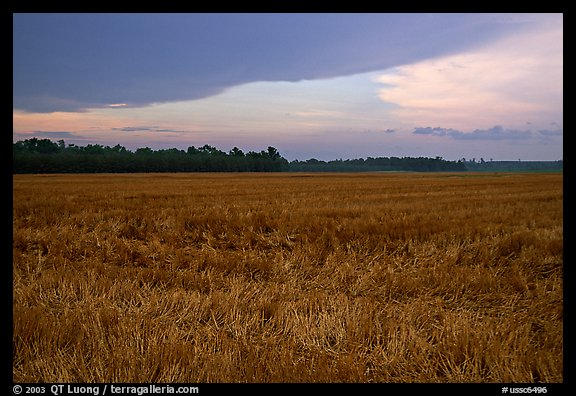Grasses at sunset, Hilton Head. South Carolina, USA (color)