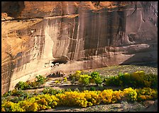 Floor of canyon with cottonwoods in fall colors and White House ruins. Canyon de Chelly  National Monument, Arizona, USA