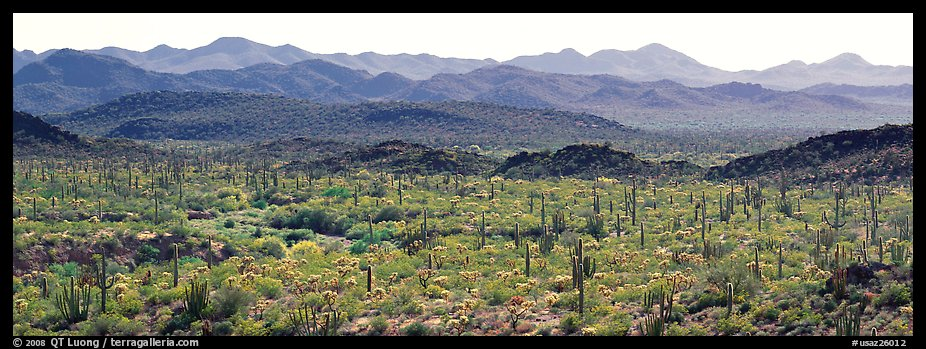 Desert landscape with cactus and distant mountains. Organ Pipe Cactus  National Monument, Arizona, USA (color)