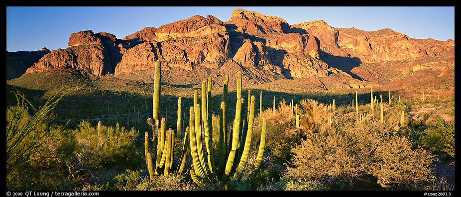 Scenery with organ pipe cactus and desert mountains. Organ Pipe Cactus  National Monument, Arizona, USA (color)