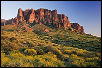 Wildflowers and  Superstition Mountains, Lost Dutchman State Park, sunset. Arizona, USA (color)