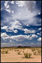 Sandy flat and clouds, Sonoran Desert National Monument. Arizona, USA ( color)