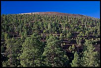 Pine trees on slopes of crater. Sunset Crater Volcano National Monument, Arizona, USA ( color)