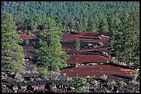 Pine trees, hardened lava. Sunset Crater Volcano National Monument, Arizona, USA ( color)