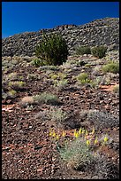 Volcanic hillside, Wupatki National Monument. Arizona, USA (color)
