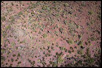 Aerial view of desert scrubland with saguaro cactus. Tucson, Arizona, USA ( color)