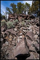 Talus with petroglyph, Nampaweap. Parashant National Monument, Arizona, USA ( color)