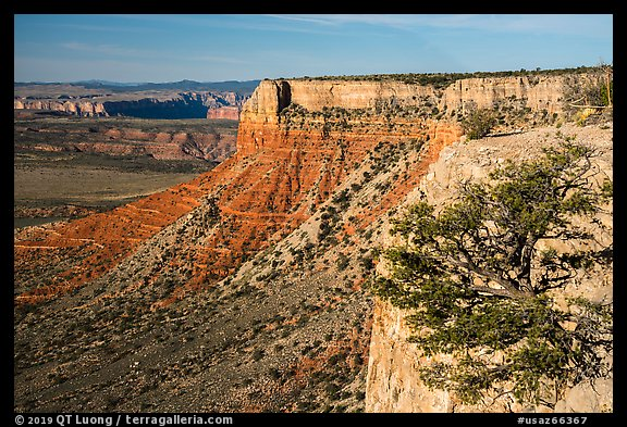 Grand Canyon Rim with tree, Twin Point. Parashant National Monument, Arizona, USA (color)