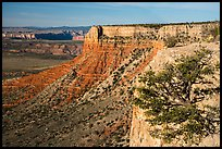 Grand Canyon Rim with tree, Twin Point. Parashant National Monument, Arizona, USA ( color)