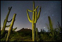 Saguaro cactus, Ragged Top, and starry sky at night. Ironwood Forest National Monument, Arizona, USA ( color)