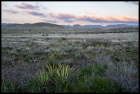 Desert grassland at sunset. Agua Fria National Monument, Arizona, USA ( color)