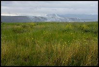 Tall grasses, spring wildflowers with foggy canyon. Agua Fria National Monument, Arizona, USA ( color)