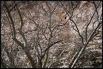 High cliff dwelling seen through bare branches, Montezuma Castle National Monument. Arizona, USA ( color)