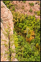 Cliff and aspen. Navajo National Monument, Arizona, USA ( color)
