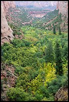 Forest in early autumn, Betatakin Canyon. Navajo National Monument, Arizona, USA ( color)