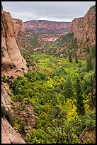 Betatakin Canyon in early autumn. Navajo National Monument, Arizona, USA ( color)
