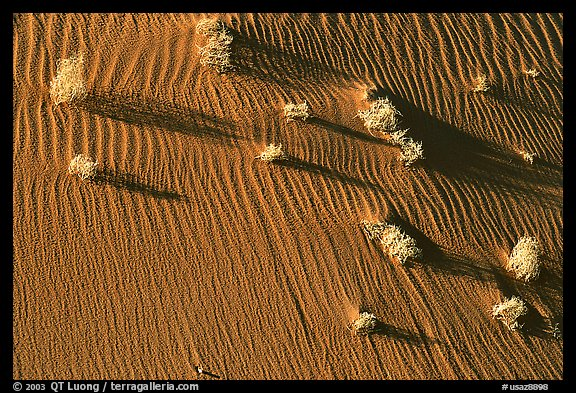 Bushes on sand dune. Canyon de Chelly  National Monument, Arizona, USA (color)