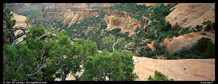 Mesa landscape. Colorado National Monument, Colorado, USA (color)
