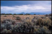 Shrubs on flats and Sleeping Ute Mountain, evening. Canyon of the Ancients National Monument, Colorado, USA ( color)