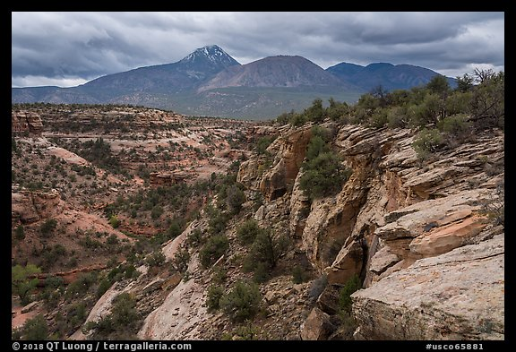 Sand Canyon. Canyon of the Anciens National Monument, Colorado, USA (color)