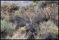 Shrubs and Lower House wall. Yucca House National Monument, Colorado, USA ( color)