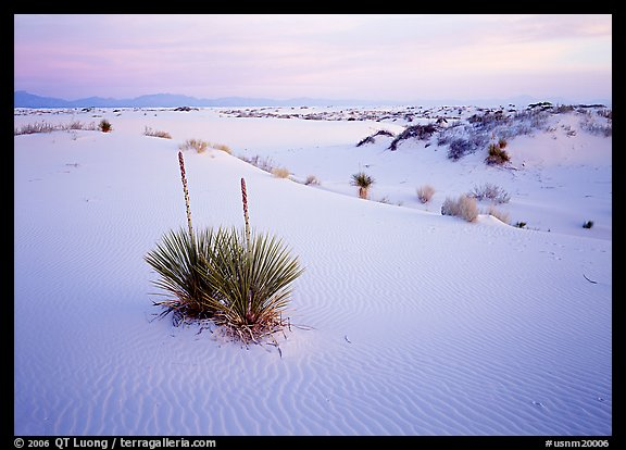 Yuccas and gypsum dunes, dawn. White Sands National Park (color)