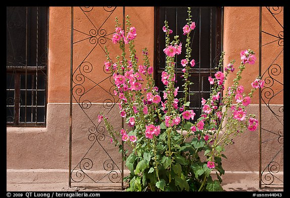 Flowers and wall, Church San Felipe de Neri. Albuquerque, New Mexico, USA (color)
