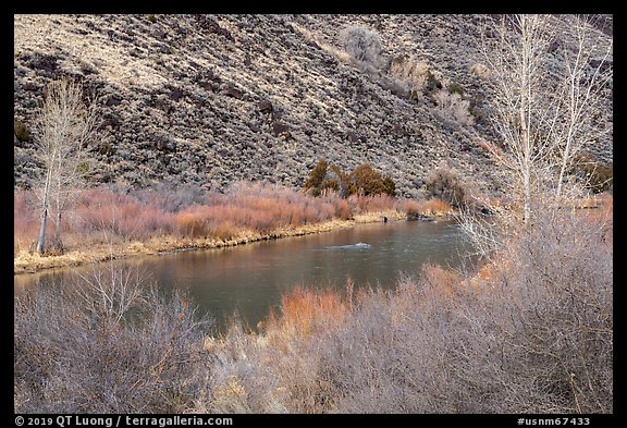 Willows and trees along the Rio Grande River. Rio Grande Del Norte National Monument, New Mexico, USA (color)