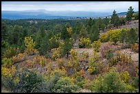 Forest in autumn on Pajarito Mesa. Bandelier National Monument, New Mexico, USA ( color)