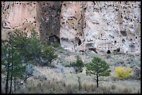 Cliff with cave dwellings rising from Frijoles Canyon. Bandelier National Monument, New Mexico, USA ( color)