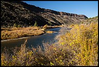 Shrubs in autum foliage and cliffs, Orilla Verde. Rio Grande Del Norte National Monument, New Mexico, USA ( color)