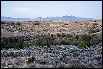 Sagebrush and juniper, Taos Valley Overlook. Rio Grande Del Norte National Monument, New Mexico, USA ( color)