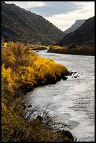 Fall colors on the banks of the Rio Grande River. Rio Grande Del Norte National Monument, New Mexico, USA ( color)
