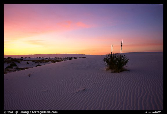 Yucca at sunrise. White Sands National Monument, New Mexico, USA (color)