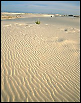 Ripples in sand dunes. White Sands National Monument, New Mexico, USA (color)
