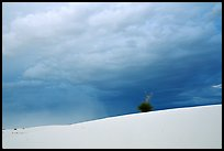 Lone Yucca. White Sands National Monument, New Mexico, USA ( color)