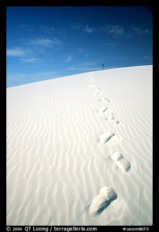 Footprints. White Sands National Park, New Mexico, USA.