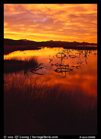 Reeds and branches in marsh, sunrise, Havasu National Wildlife Refuge. Nevada, USA (color)