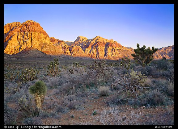 Yuccas and rock walls at sunrise, Red Rock Canyon. Red Rock Canyon, Nevada, USA (color)