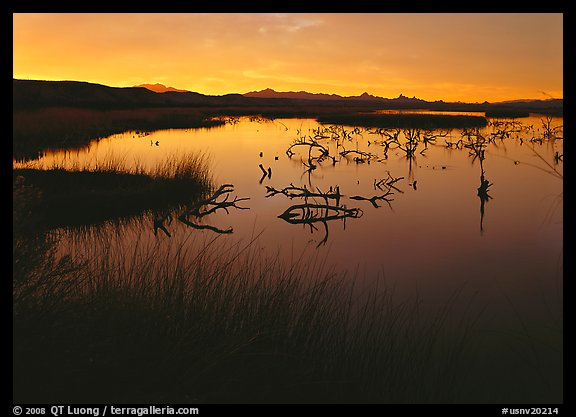 Wetlands at sunrise, Havasu National Wildlife Refuge. USA (color)
