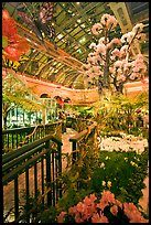 Botanical garden and conservatory with green light, Bellagio Casino. Las Vegas, Nevada, USA (color)