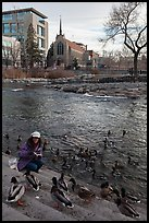 Woman feeding ducks on steps of Truckee River. Reno, Nevada, USA ( color)