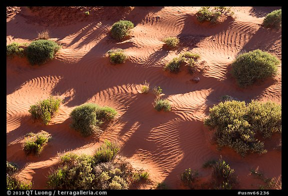 Dunes from above. Gold Butte National Monument, Nevada, USA (color)