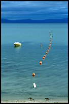 Two birds, buoy line and boat, South Lake Tahoe, California. USA ( color)