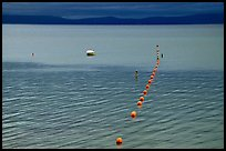 Buoy line, South Lake Tahoe, California. USA ( color)