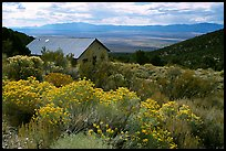 Sage in bloom and cabin, Snake Range. Nevada, USA ( color)
